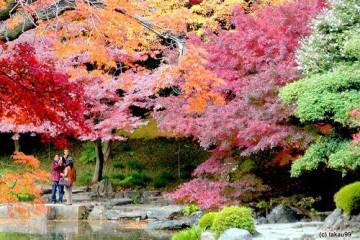 Du học Nhật Bản: Đặc trưng của các kỳ nhập học