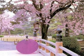 Cách du học sinh hòa nhập văn hóa Nhật Bản
