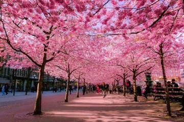 Vài nét tổng quan về du lịch Nhật Bản
