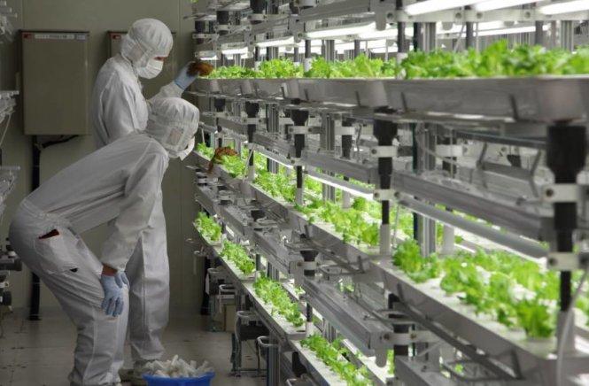 Du học Nhật Bản ngành nông nghiệp