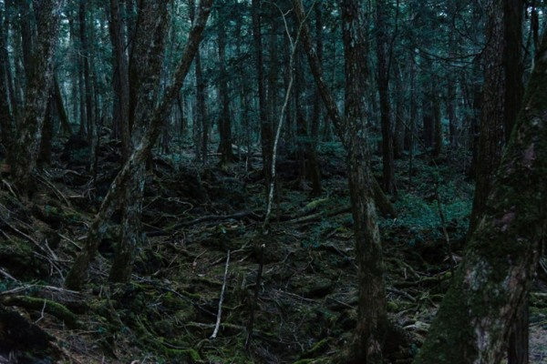 Huyền thoại khu rừng tử thần Nhật Bản