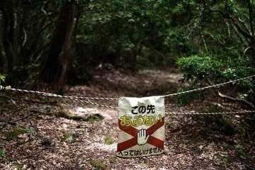 Huyền thoại về khu rừng tử thần ở Nhật Bản