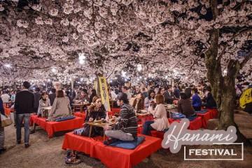 Lễ hội hoa anh đào của nhật bản – lễ hội Hanami