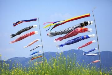 Lễ hội cá chép Koinobori dành cho bé trai tại Nhật