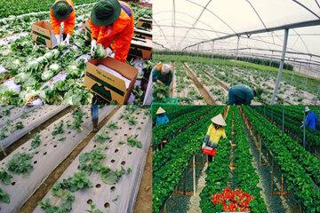 Đơn hàng nông nghiệp Nhật Bản lương cao, phí thấp cho nam và nữ